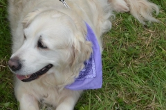 2013-08-24 DOGSHOW 017 (Copy)